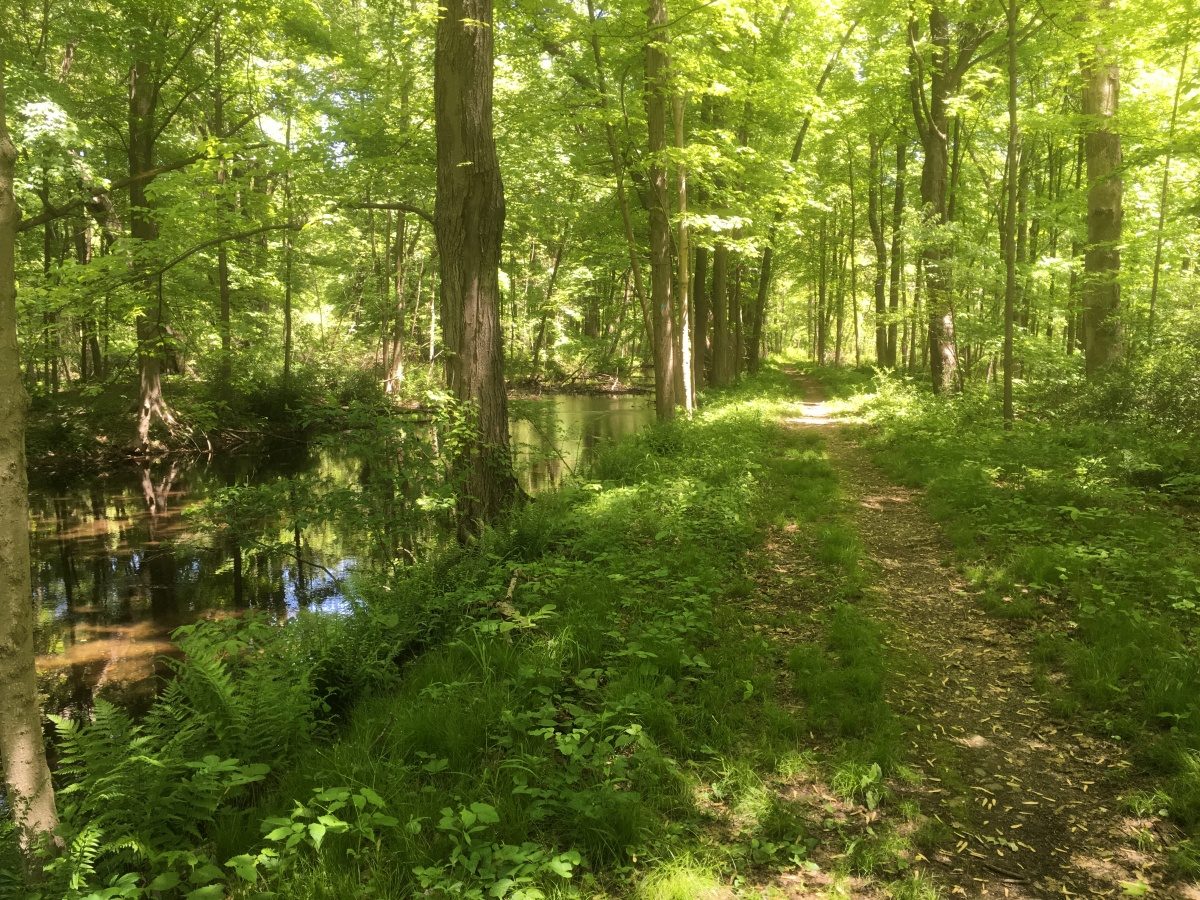 Easing Back Into Hiking: Morris Canal Greenway