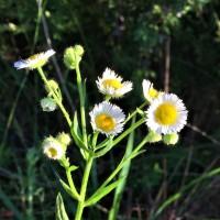 Cushetunk Wildflowers