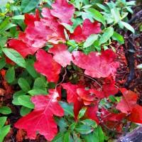 New York Foliage